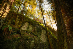 Cliff (briantolin) Tags: cliff canada nature vancouver forest woods britishcolumbia foliage lighthousepark