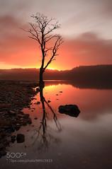 Loch Ard Sunrise (hmbautista) Tags: morning red reflection tree water sunrise landscape photography scotland scenery alone glow view scottish single lone loch lomond trossachs ard lochardsunriselochardsunriselochardcanvaslochardprintslochardwallarttreecanvastreewallartsunrisewallartsunrisecanvaslochlomondandtrossachslochlomondandtrossachswallartlochlomondandtrossachsviewlochlomondandtross