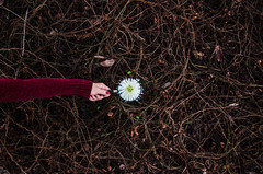 A Closer Look (Brooke Wrightt) Tags: winter texture spring hands dynamic outdoor fineart surreal naturallight wideangle dreamy minimalism conceptual tangle fineartphotography naturephotography dyingflowers