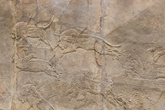 DSCF7011.jpg (Darren and Brad) Tags: england london thebritishmuseum assyria assyrian sportofkings ashurbanipal lionhunting royallionhunts