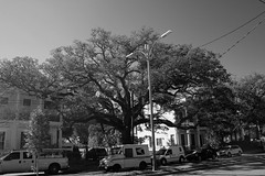 Big Tree ; us postal (assis sur le rebord du monde...) Tags: voyage new travel blackandwhite usa white house black tree home apple canon big orleans louisiana noir noiretblanc neworleans carnaval writer gras voyager nola easy mardigras backpacker blanc mardi cajun timberland doux 70d