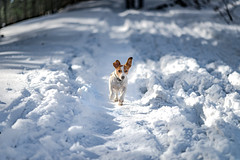Arrow Happines (Luke Plonka) Tags: dog snow fix lens happy lights nikon luke 85mm poland cutie arrow malik plonka d800e 8518g