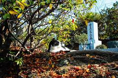 Today's Cat@2016-01-17 (masatsu) Tags: cat sigma catspotting thebiggestgroupwithonlycats dp0quattro