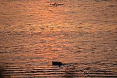 gold sea (archgionni) Tags: sunset sea sun nature water reflections gold boat barca tramonto mare waves fishermen natura sole acqua riflessi oro onde pescatori peopleenjoyingnature