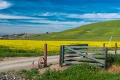 RHM_1368-1358.jpg (RHMImages) Tags: california field yellow fence landscape us nikon unitedstates farm flag livermore mustand d810