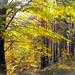 Autumn+forest