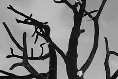 IMG_2568 (oanissimova91) Tags: winter tree wish petrozavodsk