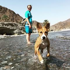Fun at Wadi Abyad with Petra. #Oman