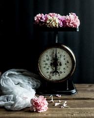 In the Light (Caz Ann) Tags: stilllife white flower home vintage