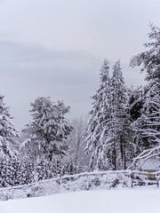 DSC01611-2 (johnjmurphyiii) Tags: winter usa snow connecticut shelly cromwell originaljpeg johnjmurphyiii 06416 sonycybershotdsch90