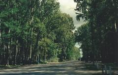 Raíces (Pau Barr) Tags: trees film nature vintage arbol woods nikon bosque analogica n65 marchiquita