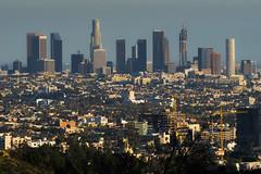 Hazy LA (John Ransom Tucker) Tags: city trees skyline buildings la losangeles haze downtown cityscape skyscrapers cranes laskyline
