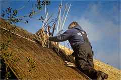 The Thatcher At Work. (Petefromstaffs) Tags: roof canon cottage elements thatchedroof staffordshire thatcher workman craftsmanship alrewas skilled 60d