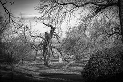 old and strong (docdave71) Tags: house black yellow garden landscape withe chestnuts oaks cedars ascott tranquillity