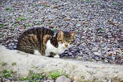 Today's Cat@2016-03-28 (masatsu) Tags: cat pentax catspotting mx1 thebiggestgroupwithonlycats