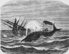 """The Loss of the """"Essex.""""  In Frank Leslie's Popular Monthly (May, 1879) (lhboudreau) Tags: ocean sea art loss illustration magazine etching illustrations engraving whale whales magazines essex whaling sinking mobydick engravings 1879 etchings spermwhale spermwhales melville sinkingship 1820 ronhoward philbrick whalingship frankleslies nathanielphilbrick intheheartofthesea frankleslie lossatsea hemanmelville sinkingoftheessex lossoftheessex americanwhaling americanwhalingship franklesliesmonthly franklesliespopularmonthly may1879 thelossoftheessex"""