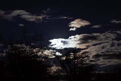 daylight cloudy silhouette (ROTPOD) Tags: trees sky moon white black silhouette dark photography daylight cloudy albuquerque eerie mixture rotpod