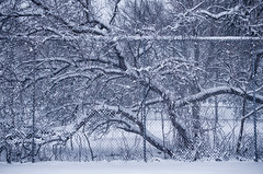 Undercover Spring (flashfix) Tags: winter ontario canada tree nature lines weather fence spring nikon ottawa textures busy 40mm urbanjungle mothernature tenniscourt chaotic 2016 d7000 nikond7000 2016inphotos april062016