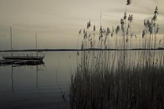 Rangsdorfer See - Brandenburg (elisachris) Tags: water landscape wasser natur silence landschaft brandenburg ricohgr stille abendstimmung blauestunde rangsdorfersee