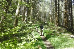 tillamookhike06 (jcravens) Tags: oregon forest hike campground galescreek stateforest tillamookforest