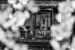 Gion, Kyoto (Jennifer ) Tags: japan kyoto sakura  cherryblossoms lightup gion       nikonafsnikkor70200mmf28gedvrii gion nikond4s