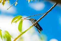 Reloj (OskarChangoluisa) Tags: bird azul ecuador nikon time jardin dia reloj felicidad tarde hermosura d3200