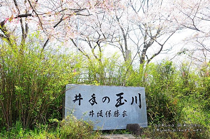 2014玉川 (1).jpg