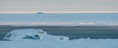 Mother Polar Bear With Cub (Morris Hersko) Tags: bear sunset white snow ice norway mother son svalbard arctic polarbear iceberg polar snowmobile seaice icefloe northpole ursusmaritimus snowmobiling svalbardandjanmayen bettermomentsas