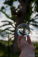 Boule cristal arbre, polynésie (Eliette S) Tags: ball nikon tahiti cristal arbre boule d610 polynésie