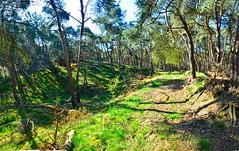 Lommel dal in zustersbos pano (eddy.vanransbeeck) Tags: natuur bos heide lommel