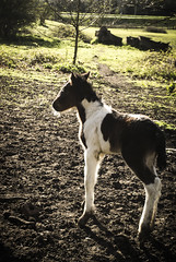 First day (Laura Grimsley Photographer) Tags: horse baby cute nature field animal contrast self landscape photography student nikon warm image wildlife young clarity sharp selftaught strong editing equestrian edit foal amature nikond3100 ukforests