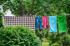 The-Clothes-Line (desouto) Tags: trees green nature colors line clothes