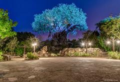 Preview: Nighttime Awakenings Lighting Scheme (orlandobrothas) Tags: world life tree animal night orlando florida magic kingdom disney wdw walt hdr dak 1901 2016