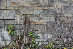 Cecilienhof 001 (Frank Guschmann) Tags: nikon potsdam neuergarten schlosscecilienhof d7100 frankguschmann nikond7100