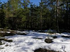 Nuuksio (jiihaa) Tags: lake tree ice forest finland landscape spring nuuksio lx100 siikaranta