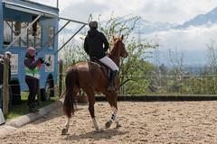 DSC08759_s (AndiP66) Tags: gelb martinameyer grueb wolhusen luzern springen hildisrieden reitsportcenter estermann traselinge 2016 september pferd horse schweiz switzerland kantonluzern cantonlucerne concours wettbewerb horsejumping equestrian sports springreiten pferdespringen pferdesport sport sony sonyalpha 77markii 77ii 77m2 a77ii alpha ilca77m2 slta77ii sony70400mm f456 sony70400mmf456gssmii sal70400g2 andreaspeters ch