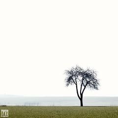 Solo    artist:DAX  PHOTOGRAPHOHOLIC  | born to capture |    #artistDAX #photographoholic #outdoor #nature #landscape #countryside #tree #minimal #minimalism #singletree #germanurlaub #germany #deutschland#nrw #nrw #nrw_friends #owl #traveltogermany #neop (artist:DAX) Tags: tree nature landscape deutschland countryside outdoor minimal owl nrw minimalism traveltogermany singletree minimallandscape olympuseurope artistdax photographoholic neoprimemag germanurlaub germanyartistdax nrwfriends