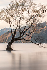 Unknown tree in a secret place, and unknown lake (furbs01 Thanks for 3,600,000 + views) Tags: longexposure landscape ndfilter canon70200mm canon7d