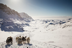 On a dog sled going downhill (bredsig) Tags: blue winter dog sun mountain snow cold ice animal landscape outside sunny downhill adventure transportation greenland sled sleddog gl dogsled sisimiut
