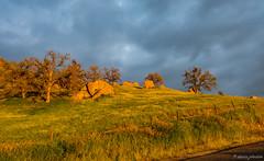 Golden Hour Contrast (dennisjohnston17) Tags: light hills wildflowers goldenhour darkclouds