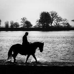 (lieksiegmund) Tags: blackandwhite horse backlight silhoutte bnw zw