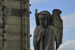 Notre-Dame (zenichetti) Tags: paris europa notredame eurotrip ferias