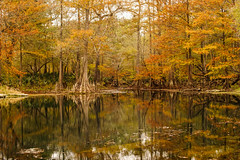 Autumn Reflections (+Lonnie & Lou+) Tags: statepark travel autumn trees sky orange usa reflection fall home nature rural forest canon outdoors 50mm spring nikon florida sony a7r