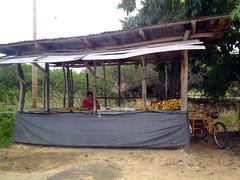Belize City - Fruit Stand (The Popular Consciousness) Tags: belize belizecity centralamerica