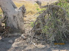 Africa 2015 058 (Absolute Africa 17/09/2015 Overlanding Tour) Tags: africa2015
