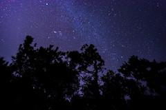 DSC_8721.jpg (Boy of the Forest) Tags: trees sky field fog night stars landscape florida meadow wideangle astro galaxy astrophotography astronomy fl nightsky 15mm milkyway gemeni gemonidsmeteorshower
