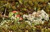 IMG_9435 (joan7272) Tags: lichen britishsoldiers