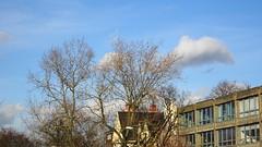 Still winter (Julie70 Joyoflife) Tags: blue sky london clouds blackheath january lookingup bleu ciel londres nuages janvier nori springinwinter photojuliekertesz photojulie70