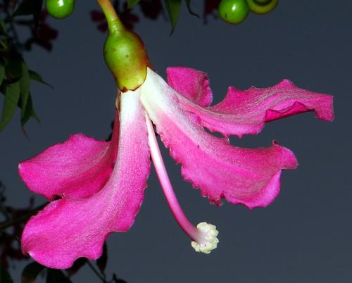 Silk Floss  #12: FLOWER PINK  @ 6:14pm