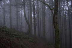 DSC_0011m (xmenifield) Tags: trees tree fog oregon eugene bent pnw